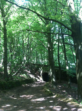 The woods above Cromford