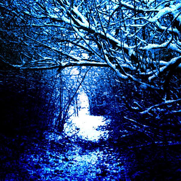 Path through snowy woods