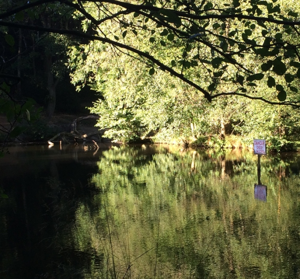 Lake in Shining Cliff Woods
